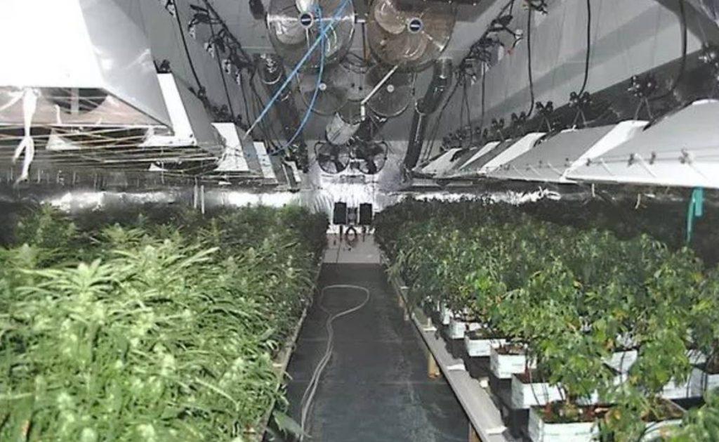 大麻屋-大麻